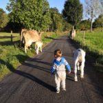 Deux vaches et trois petits
